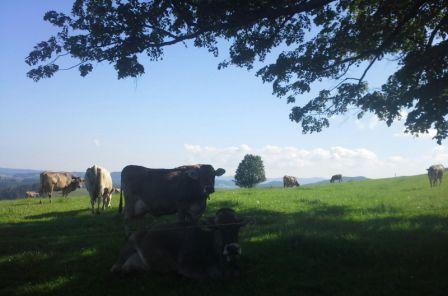 Unsere Kühe Machen Urlaub